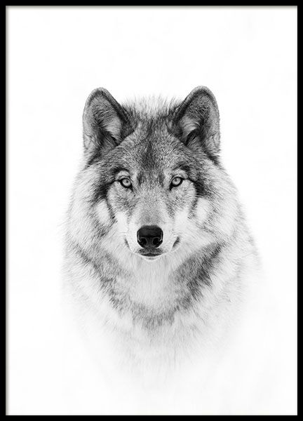 25 best ideas about wolf poster on pinterest wolf life. Black Bedroom Furniture Sets. Home Design Ideas