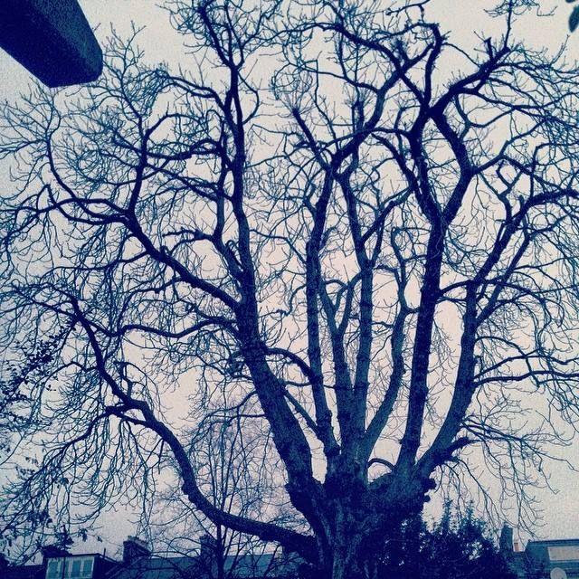 #treeoflaxmi ... framed! 7.06am. Feb 12, 2014.