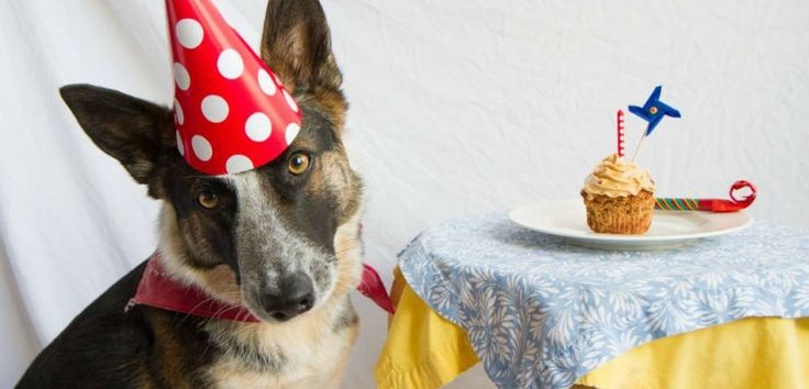 Recetas de pasteles para perros - http://www.mundoperros.es/recetas-de-pasteles-para-perros/