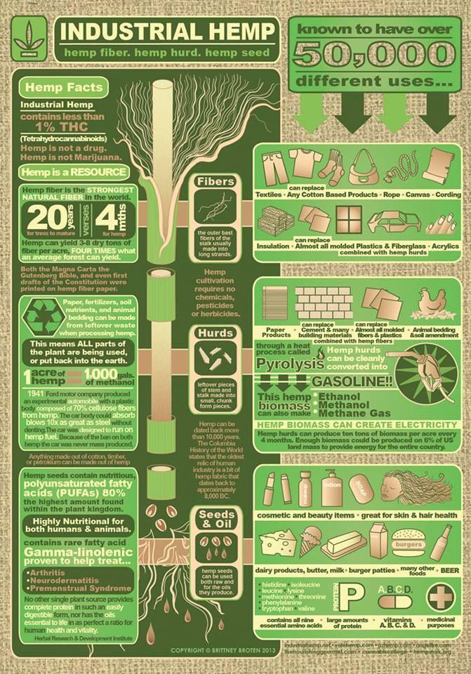 Industrial Hemp Infographic