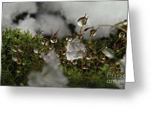 Beauty In Snow Showers Greeting Card