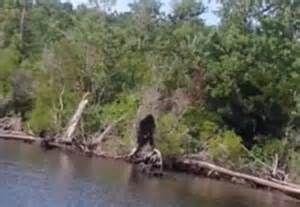 recent bigfoot sightings - Bing Images