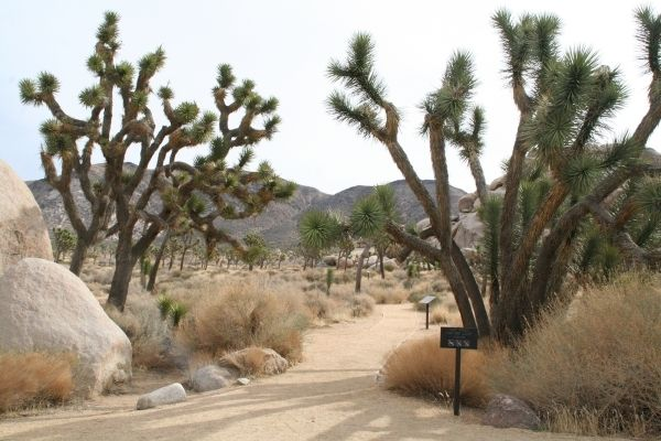 There are close to 200 miles of hiking trails in Joshua Tree National Park, Calif. Deborah Wall/Special to View