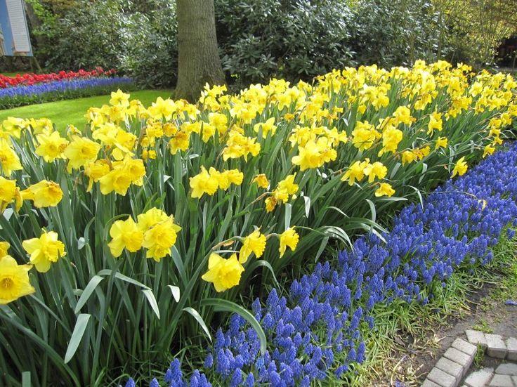 Как известно, некоторые цветы сажают не только весной, но и осенью. Осень – лучшее время для посадки луковичных: нарциссов, тюльпанов, декоративных луков. Очень подходит это время и для посадки мелко…