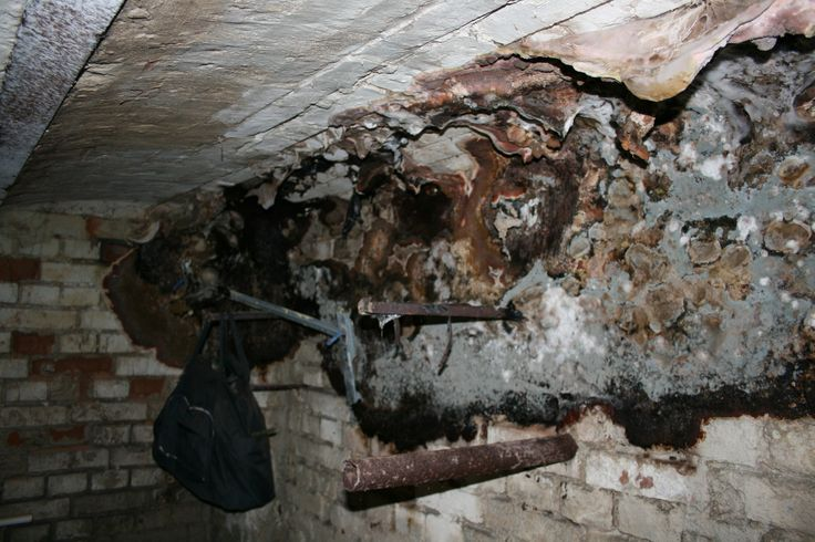 fungus cellar