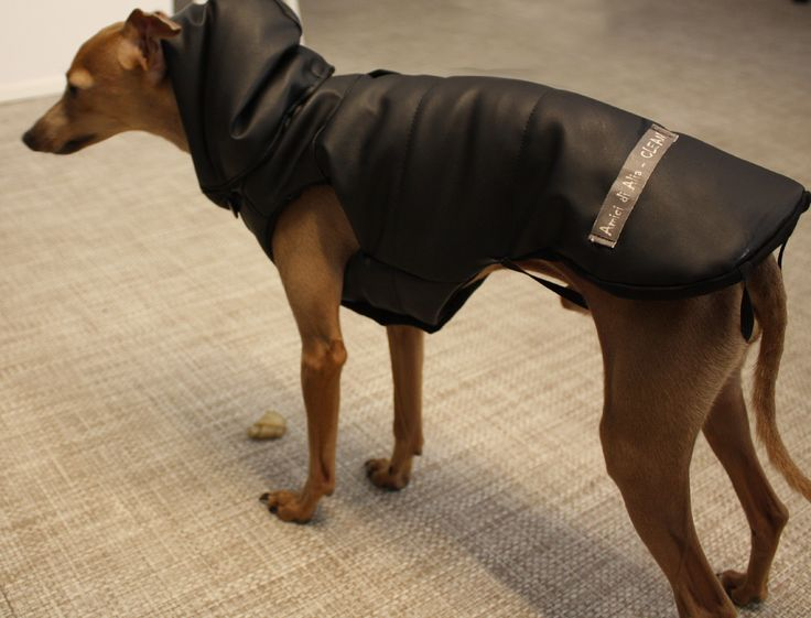 Clean, Italian Greyhound with his Custom Made Bomber. Reversible hood with fake fur!   https://www.facebook.com/amicidialia http://www.etsy.com/shop/amicidialia