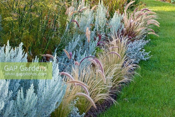 1000 images about miskantu sodai miscanthus garden for Grasses for garden borders