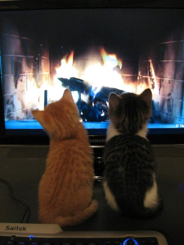 At Christmas, the kittens sit by the faux fireplace and try to catch the flames.