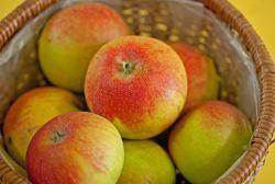 Und es gibt sie anscheinend doch! Die alten #Apfelsorten, die für #Apfelallergiker verträglicher zu sein scheinen und auch noch die Beschwerden reduzieren können: Alkmene, Eifeler Rambur, Goldparmäne Gravensteiner, Jonathan und Boskoop!