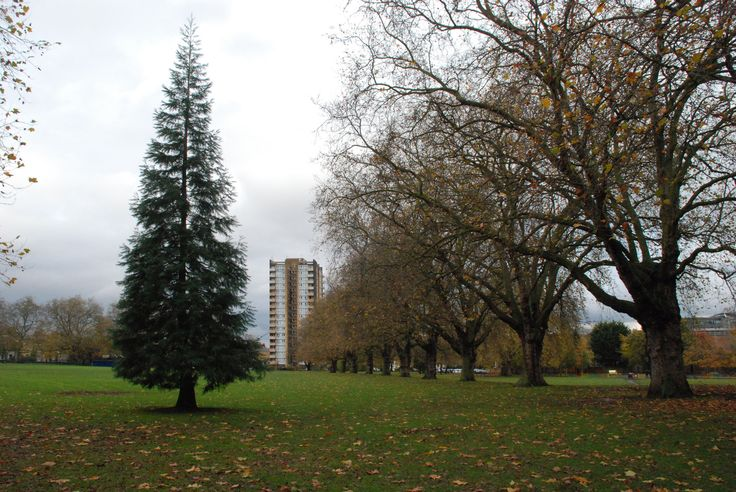 https://flic.kr/p/qjL19q   LondonFields_1074   London Fields Park, London E8 (2014).