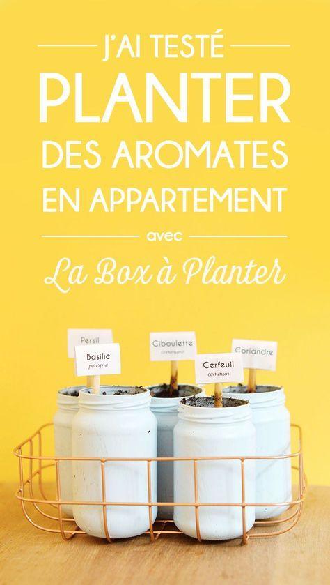 J'ai testé : planter des aromates en appartement alors que je n'ai ni jardin ni balcon ! Venez découvrir mon expérience de jardinage en intérieur avec la Box à Planter !  www.sweetandsour.fr