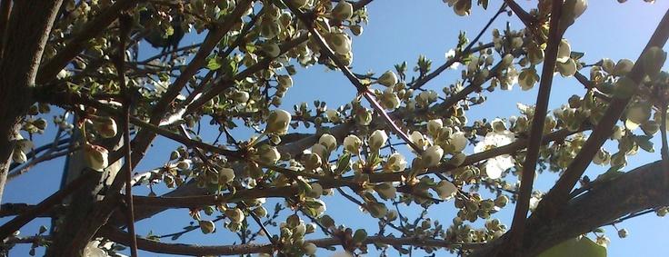 spring blossssssom