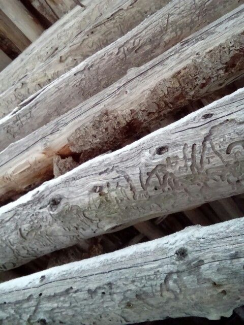 Old hay barn wall.