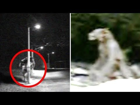 The Real Life American Dogman | Sightings & Encounters | LIFE'S