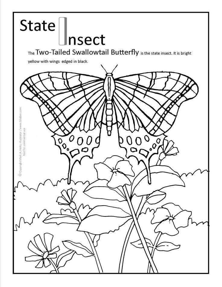 Butterfly Adults Coloring Pages To Printout