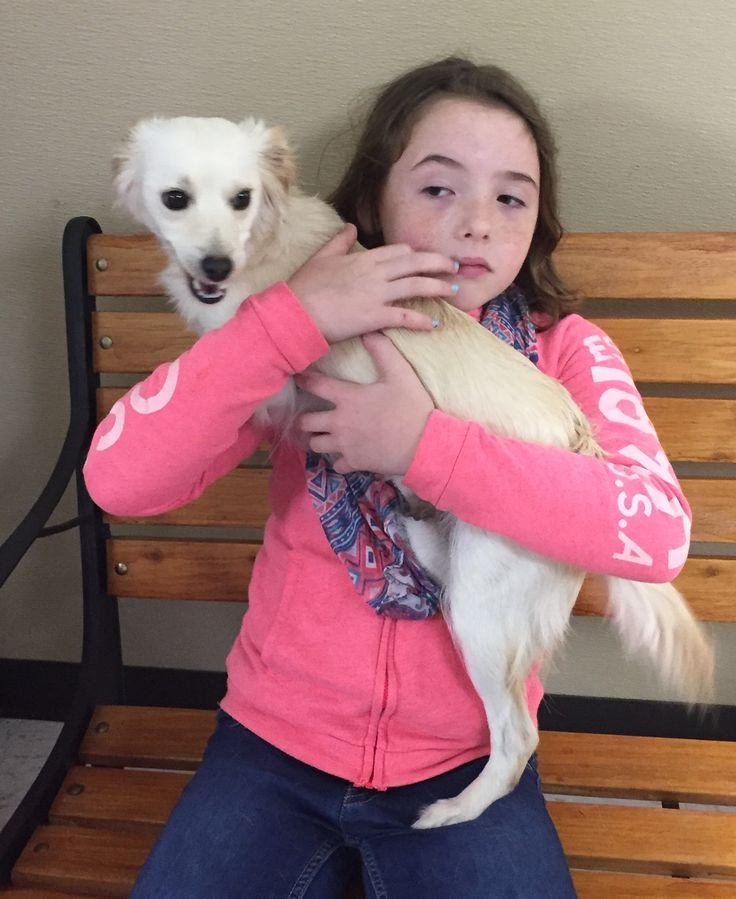 Chilier dog for Adoption in Rosenberg, TX. ADN-473712 on PuppyFinder.com Gender: Female. Age: Young