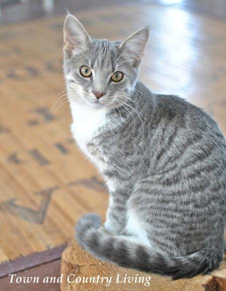 cat has scabs
