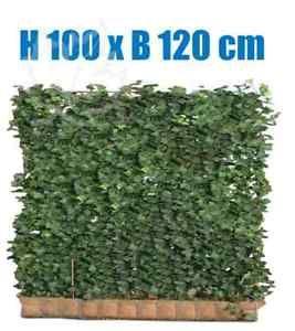 Efeu Hecke | 100 x 120 cm | Sichtschutz | immergrüne Hecke | Fertighecke