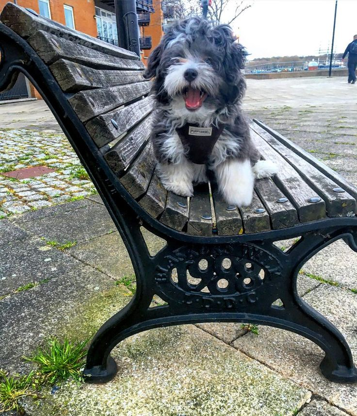 Happy puppy- happy morning :) #puppy #bilbo #bilbosaurus #happypuppy #itsfriday #счастливый #мохнатик #щенок #прогулка #лондон #англия by bilbo_saurus
