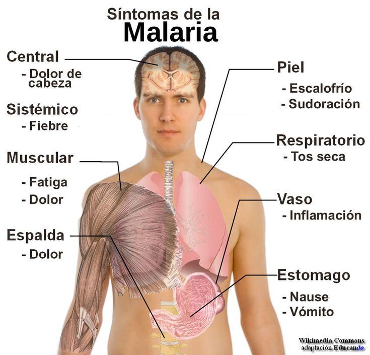paludismo o malaria - Buscar con Google