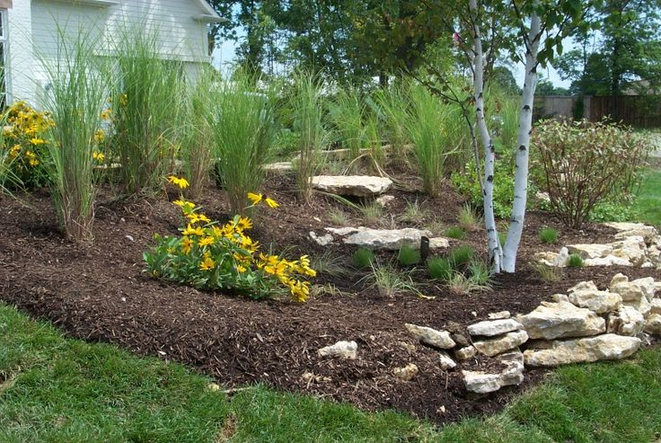 Franklin, Ohio rain garden using grasses and river birch from the soil and water conservation website