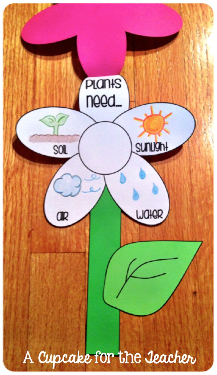 What do plants need? Cute craft to supplement your plant unit!! In Bloom {Craftivity & Printables}!