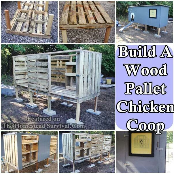 Pin by dawn johnson on chicken stuff pinterest coops for How to build a chicken coop from wooden pallets