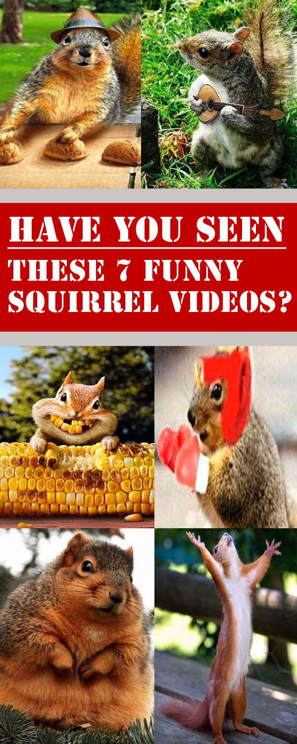 """I love funny squirrel videos and wanted to put together 7 of my ALL-TIME favorites :) These guys are literally """"Nuts""""."""