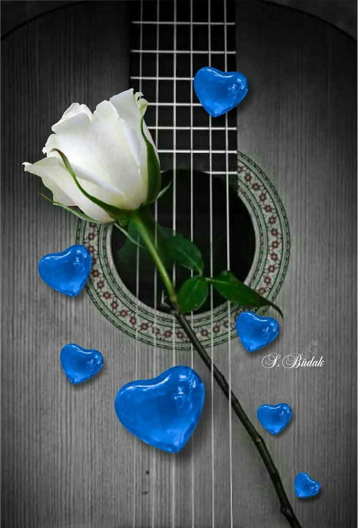 The coolest of blue hearts and white rose to relax with music played by the guitar