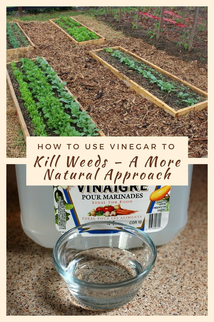 25 best ideas about weeds vinegar on pinterest vinegar - Weed killer safe for vegetable garden ...
