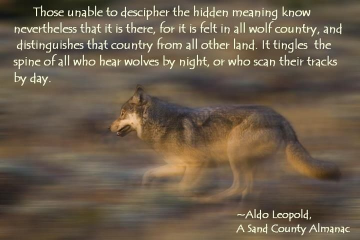 a description of aldo leopold who is considered as the father of wildlife ecology and a true wiscons A description of aldo leopold who is considered as the father of wildlife, ecology and a true wisconsin hero.
