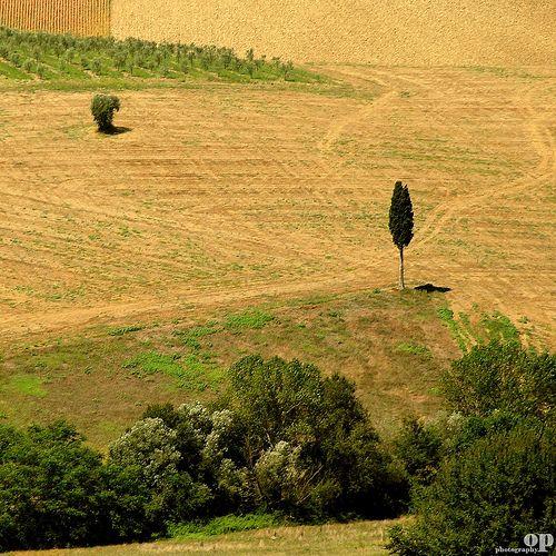 Lone Cypress   Osvaldo_Zoom