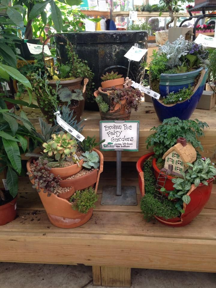 Broken Pot Fairy Gardens! Come And Get One At The Royal Oak Store. So
