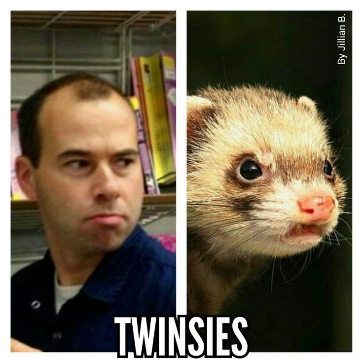 James Murray of Impractical Jokers and the angry ferret are #twinsies