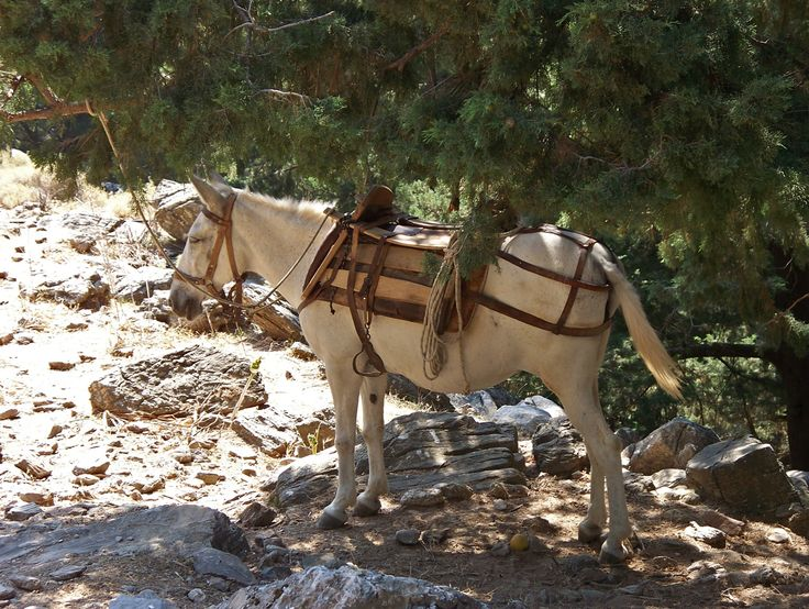 #Samaria #Gorge : Useful #information to avoid the below mean of transport! http://www.cretetravel.com/activity/samaria-gorge-the-longest-in-europe/