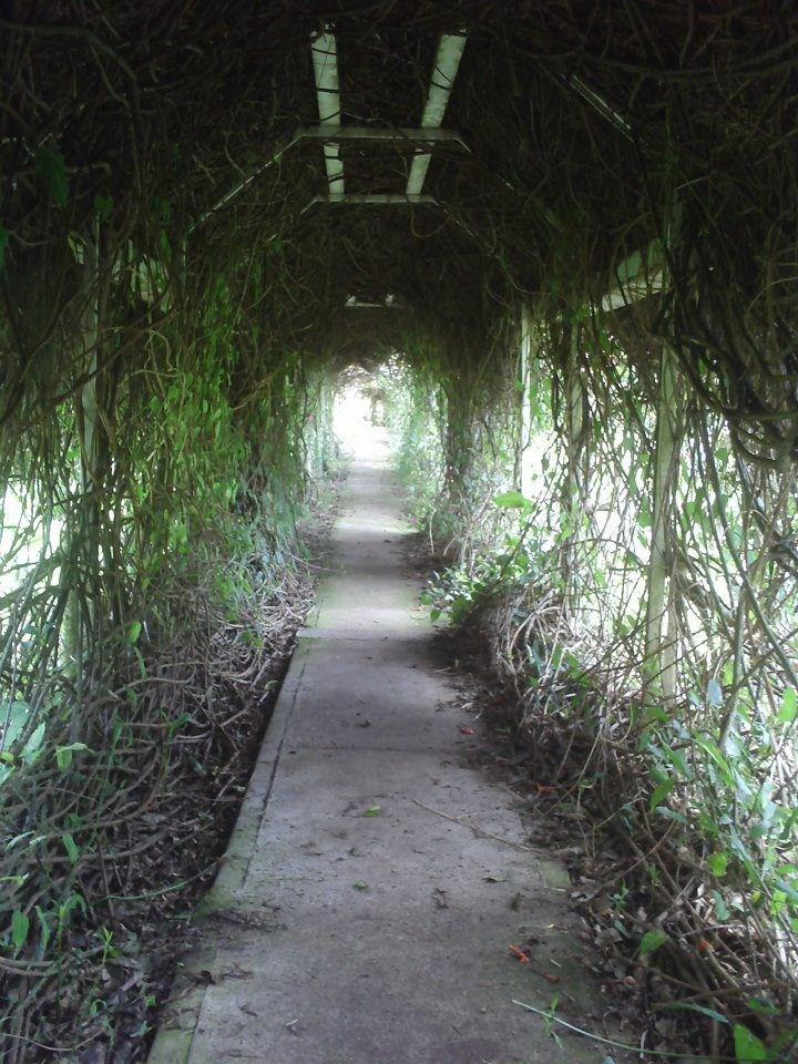 túnel vegetal