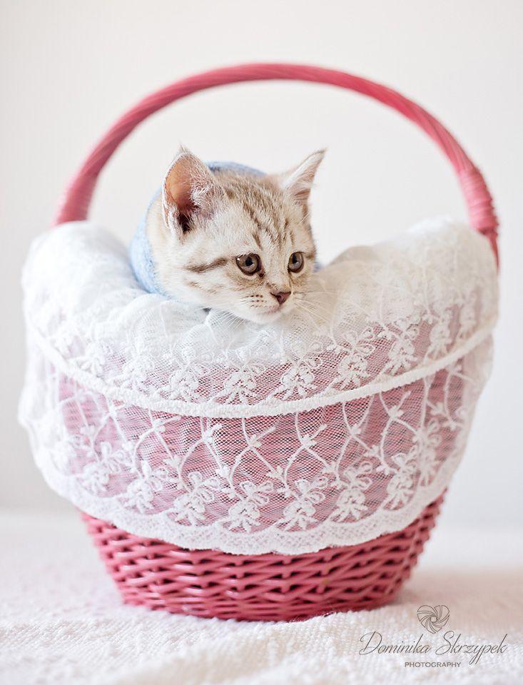 Newborn cat photo ideas. Newborn photography :) Newborn cat. Kitten. Katze :)