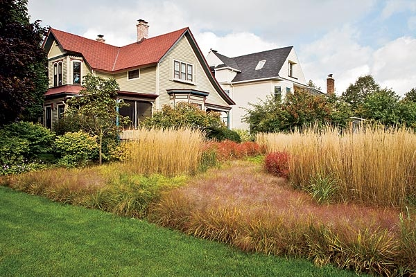 Ornamental grass lawn chicago plants pinterest for Ornamental lawn grass