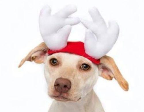 Dog Antlers Costume