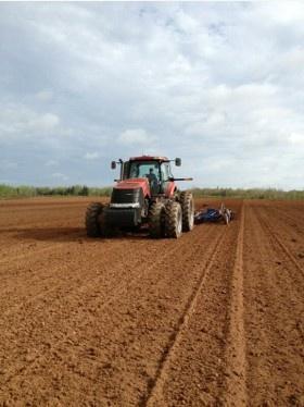 Tilling soil to plant PEI potatoes in St Peters, PEI. Photo via http://www.rollobaypotato.com
