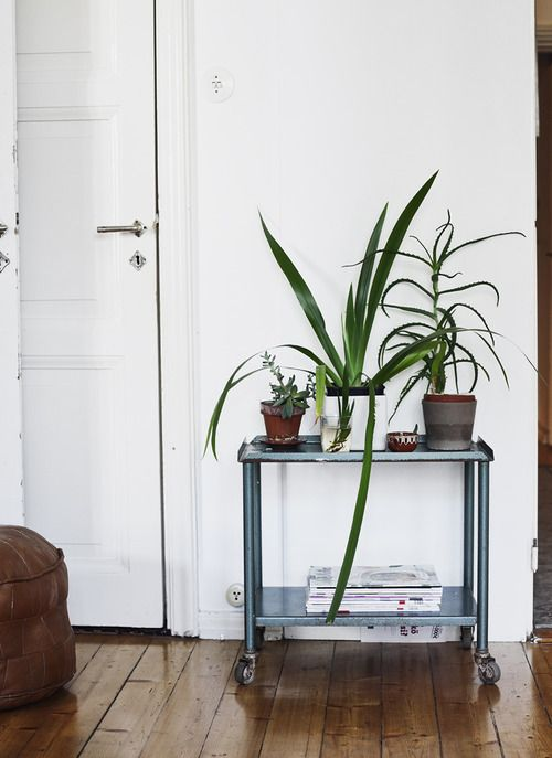 I would love to get a rolling cart from Ikea to place all our plants on. Willy and I will probably move into our own apartment soon and these would look so lovely.