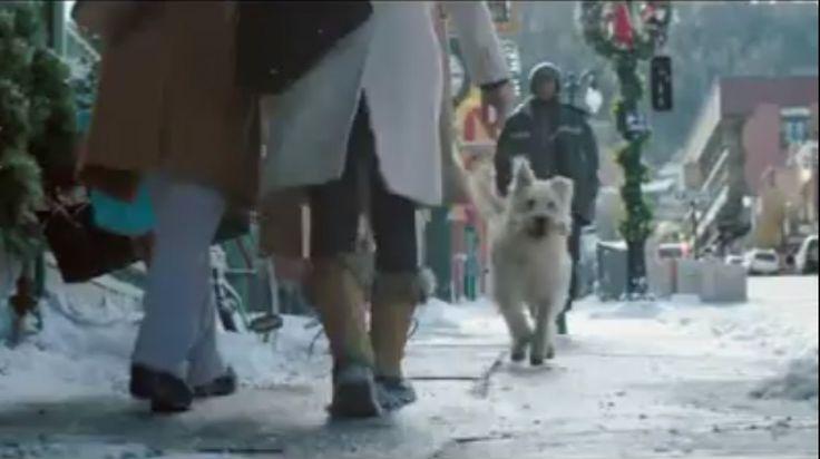 Vajon mire készül a kutya azzal a nagy csonttal?  #kkutya #video #dog  #karácsony #christmas #kutyabaráthelyek