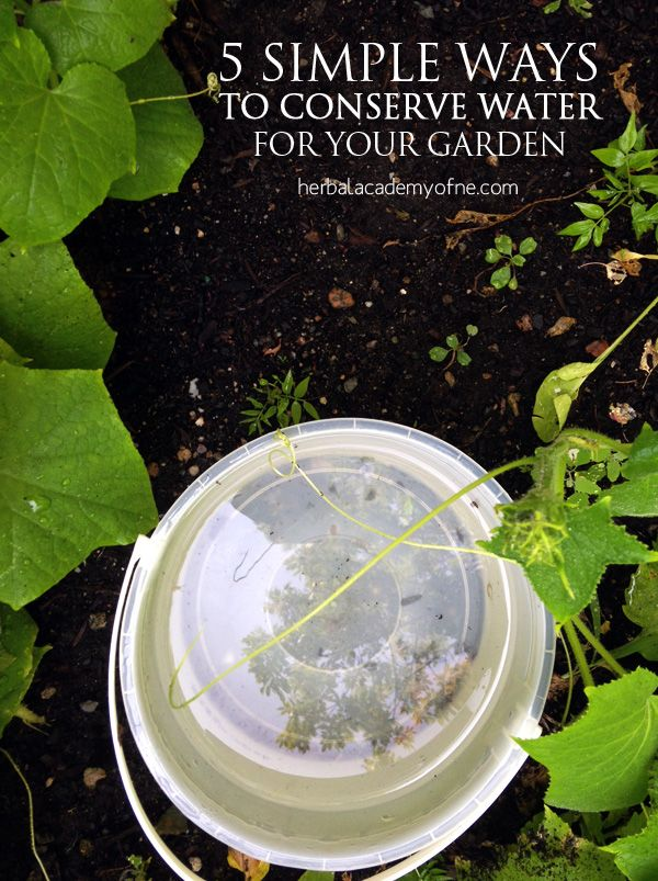 5 Simple Ways to Conserve Water for Your Garden