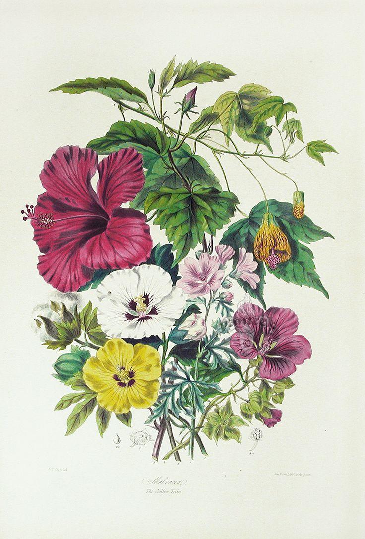 Картинки ботаника винтаж