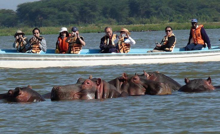 Люди и Бегемоты на озере Виктория. Африка