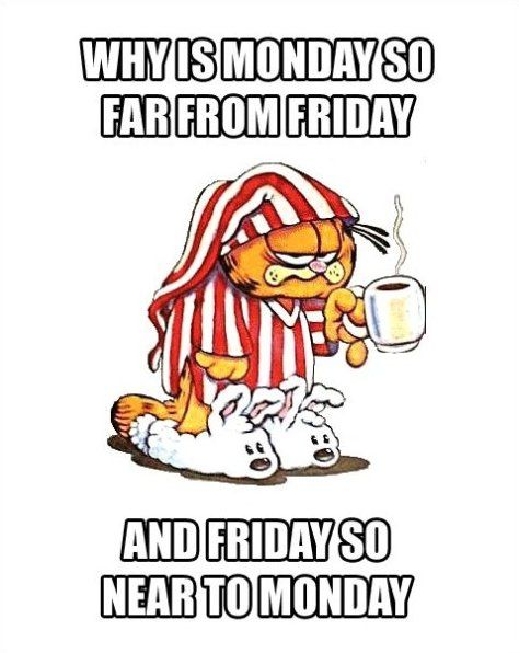 The week is all wrongCat, Quotes, Cups Of Coffe, Mondays, Coffee, Mornings Coffe, Funny, Humor, Garfield