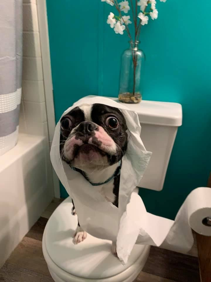How To Stop My Dog From Peeing And Pooping In The House Boston