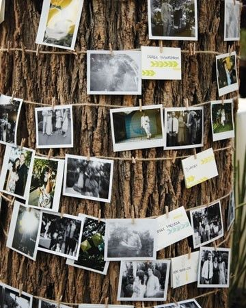 Wrap photos of the bride and groom around a tree with twine and clothespins