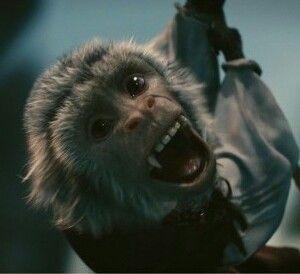 La scimmietta birichina