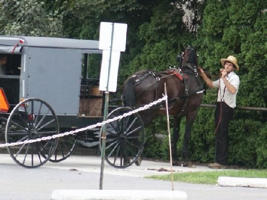 Lancaster Amish man with horse and buggy.